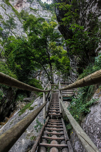 Beauty In Nature Bridge - Man Made Structure Day Forest Green Color Growth Nature No People Outdoors Railroad Track Tree