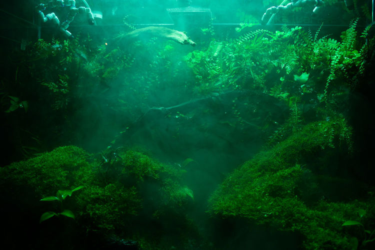 Beauty In Nature Day Forest Green Color Lightfall Magical Mist Mistic Nature No People Outdoors Sea Life Sunbeam UnderSea Underwater Water