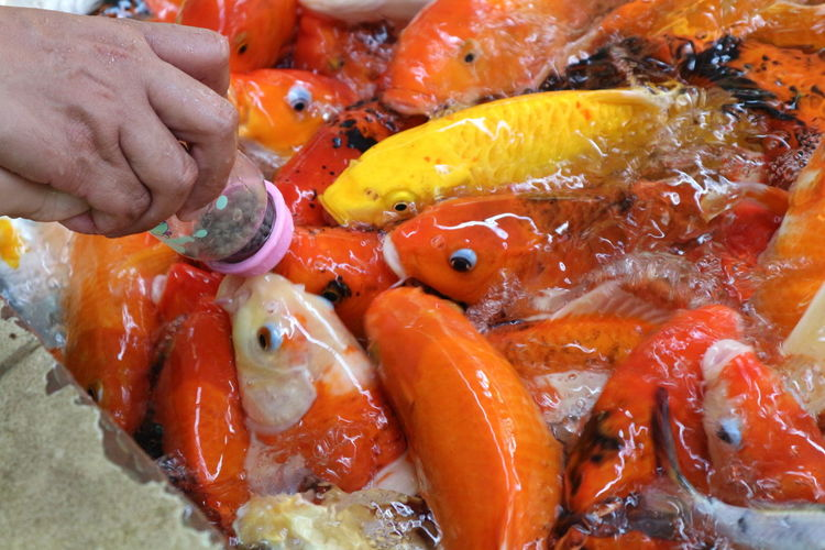 Cropped image of hand feeding fishes