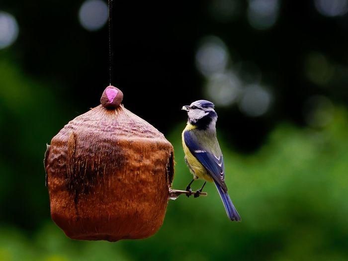 Close-Up Of Bird By Nest