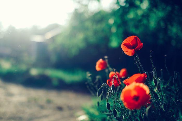 Plant Plants Plants 🌱 Planting Plants And Flowers Flower Flowers