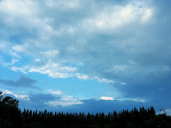 Sky Cloud - Sky Tree Beauty In Nature Blue Nature Environment Day Cloudscape