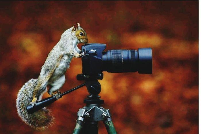 CameraMan Newpicture