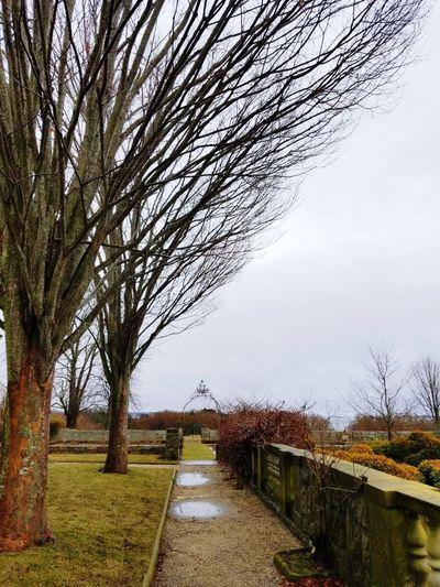 Tree Bare Tree Branch Sky Grass