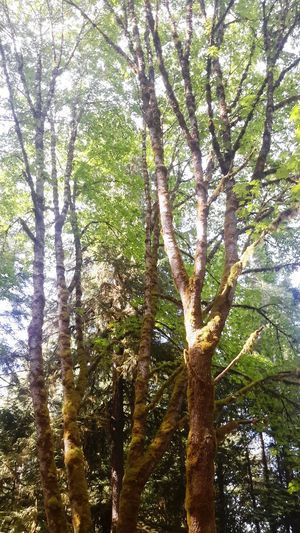Getting In Touch Soaking Up The Sun Escaping Hugging A Tree Port Alberni Parks Vancouverisland Britishcolumbia Beautifulbc Perspectives On Nature