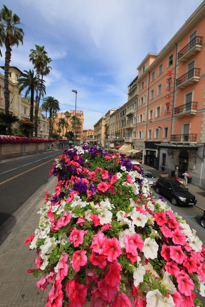 San Remo, Italy San Remo Architecture Beauty In Nature Building Exterior Built Structure Car City Day Flower Flower Head Fragility Freshness Growth Italy Land Vehicle Mode Of Transport Nature No People Outdoors Petal Plant Red Road Sky Street Transportation