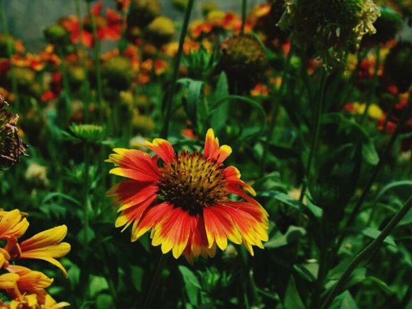 Flower Random Garden Home