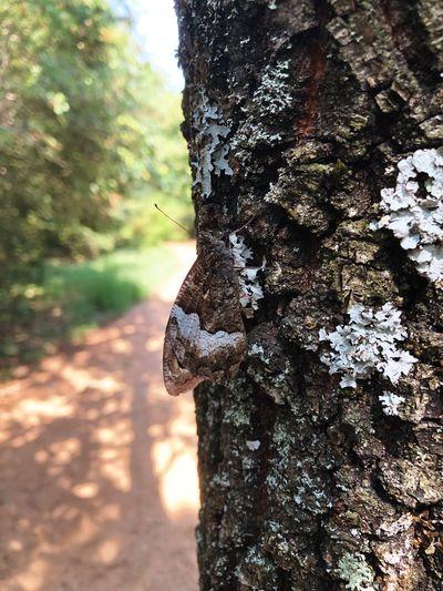 Úgy volt, hogy belehajigáljuk a nyarat a Dunába... Sukoro Hungary Butterfly Tree Nature Animal Themes