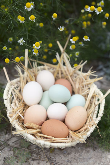 Stack of eggs in basket
