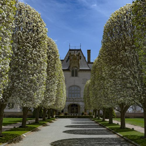 #Ochrecourt at #Salveregina University represents stunning #châteauesque #architecture in #NewporRI designed by #architect #RichardMorrisHunt #symetrical #mansions in #rhodeisland with #spring #blooms . . . . . . . . #sony #a7riii #1635gm Architecture Ochrecourt Salveregina Châteauesque NewporRI ARCHITECT Richardmorrishunt Symetrical Mansions Rhodeisland Blooms Spring Sony A7rIII 1635gm Tree City Sky Building Exterior Topiary Hedge Gate Formal Garden Palace Museum