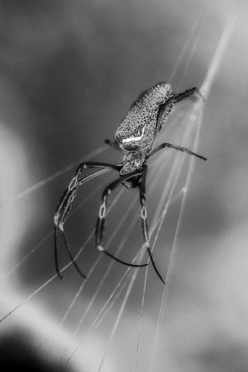 Welcome To Black Spider Animal Themes Black & White Black And White Photography Blackandwhitephotography Curves Of Nature Animals In The Wild Close-up My Edit My Style Shadows And Silhouettes Animal Wildlife My Dramatic Look  Perspectives On Nature