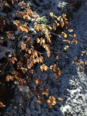 Odenwald  Leaves Snow Have A Walk