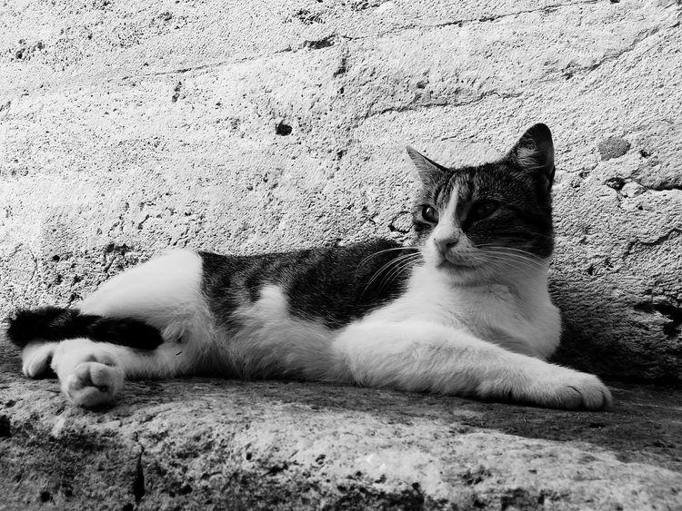 Hello World Objektifimden Istanbuldayasam Istanbul Turkey Kadrajturkiye Colour Of Life Odakgroup Hello World Rbsphotography Likeforlike #likemyphoto #qlikemyphotos #like4like #likemypic #likeback #ilikeback #10likes #50likes #100likes #20likes #likere Kedi Cat Iyikiuskudarvar