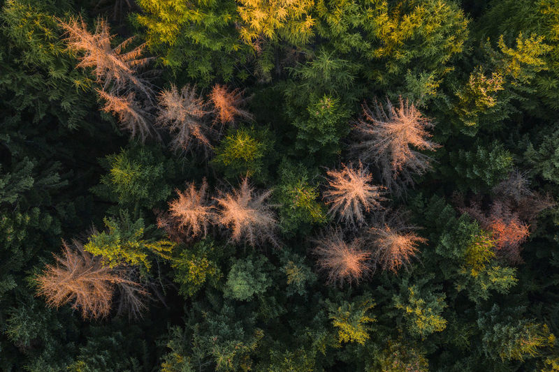 Aerial view of the forest in the sunrise light. Aerial Shot Drone  EyeEmNewHere Morning Nature Romania Aerial Aerial Landscape Aerial View Backgrounds Beauty In Nature Drone Photography Dronephotography Forest Fragility Full Frame Growth Landscape Nature No People Outdoors Plant Tranquility Tree