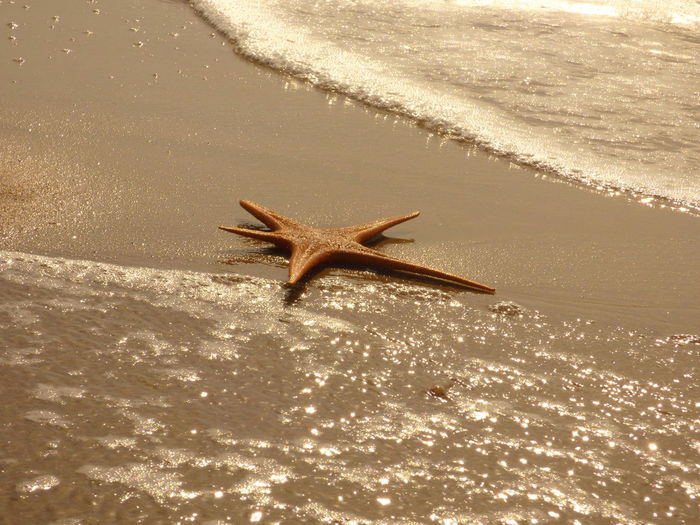 High angle view of dead starfish on shore at beach