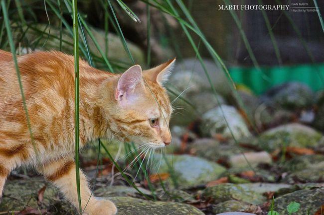 Katze Jagd