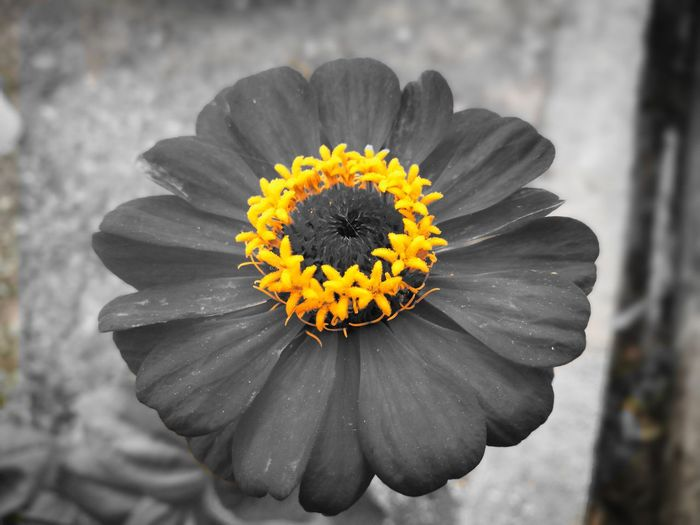Flower Fragility Flower Head Yellow Nature Petal Close-up Outdoors Directly Above Freshness Plant Pollen No People Beauty In Nature Day