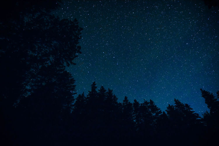 Low Angle View Of Silhouette Trees Against Star Field Sky At Night