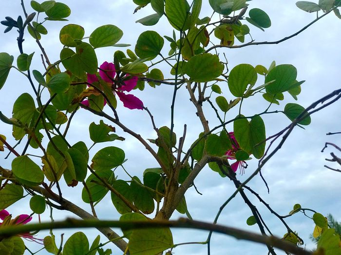 Leaf Low Angle View Growth Beauty In Nature Flower No People Plant Outdoors Day Tree Close-up Green Color Flower Head Petal Sky Freshness