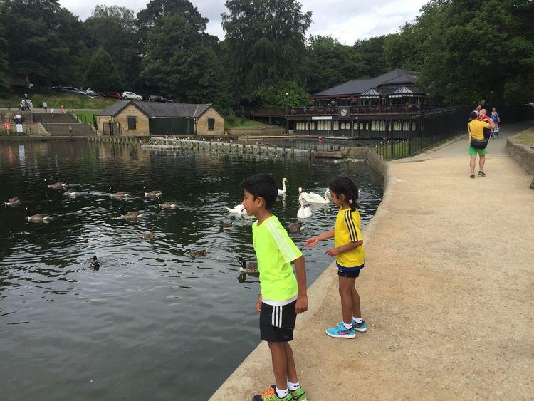 Feeding Ducks Swan Adam Miah Amelia Miah