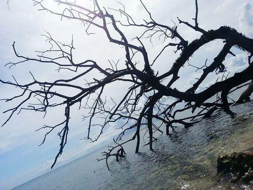 Dead Tree In The Ocean