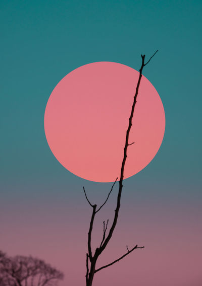 Branche with cyan gradient background and a pink circle Gradient Astronomy Bare Tree Beauty In Nature Branch Clear Sky Day Moon Nature No People Outdoors Scenics Silhouette Sky Sunset Tranquility Tree