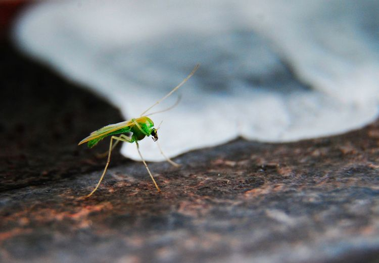 green one Macro