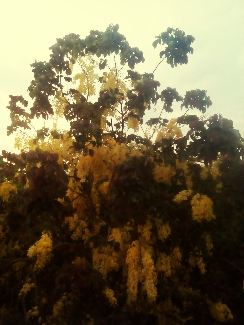 tree, growth, nature, no people, beauty in nature, low angle view, sky, outdoors, freshness, day, close-up