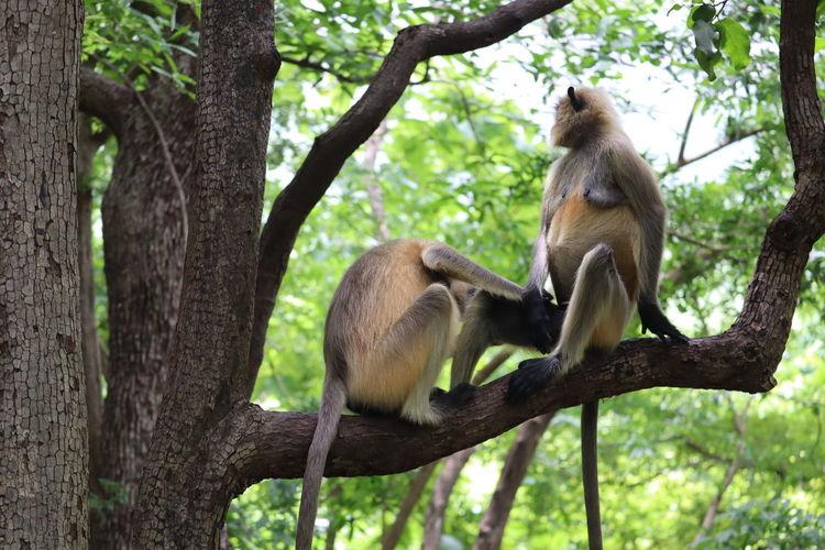 Monkeys sitting on tree trunk