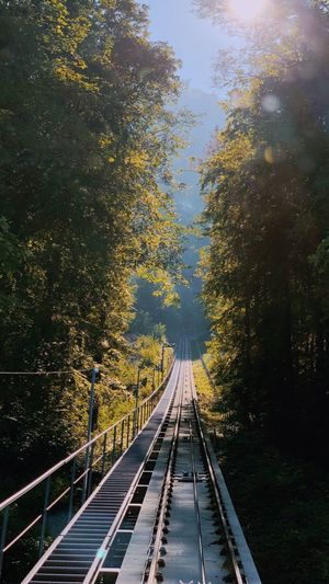 Train Nature Tree Plant Transportation The Way Forward Nature Direction Diminishing Perspective First Eyeem Photo