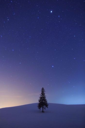 christmas tree Tree Night Star - Space Nature Scenics Beauty In Nature Star Field Tranquil Scene Sky Astronomy Constellation Tranquility Space No People (null)Galaxy First Eyeem Photo