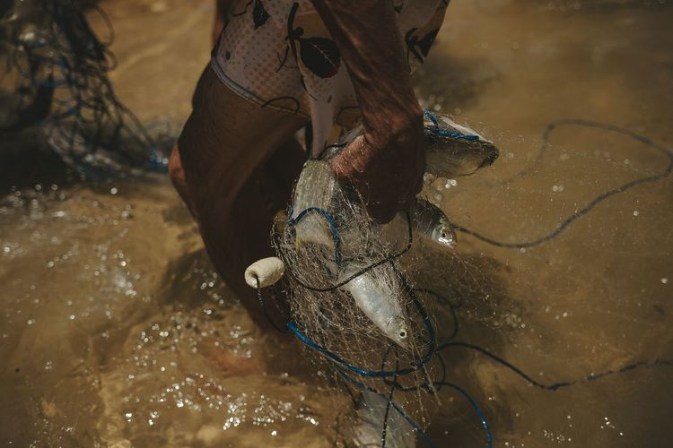 High angle view of horse in water