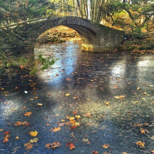 IPS2016Nature Utm UTM Pond Monet On Frozen Pond Winter Pond Frozen Pond Leaves Frozen In Water Fall Frozen