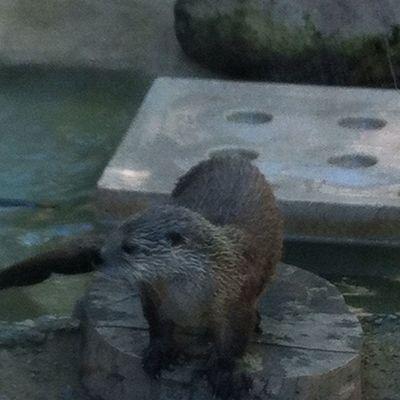 Sea Otter Flow !! Astroids