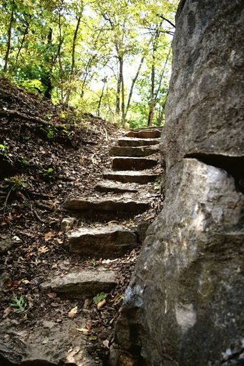 Narrow stairs along trees in the forest