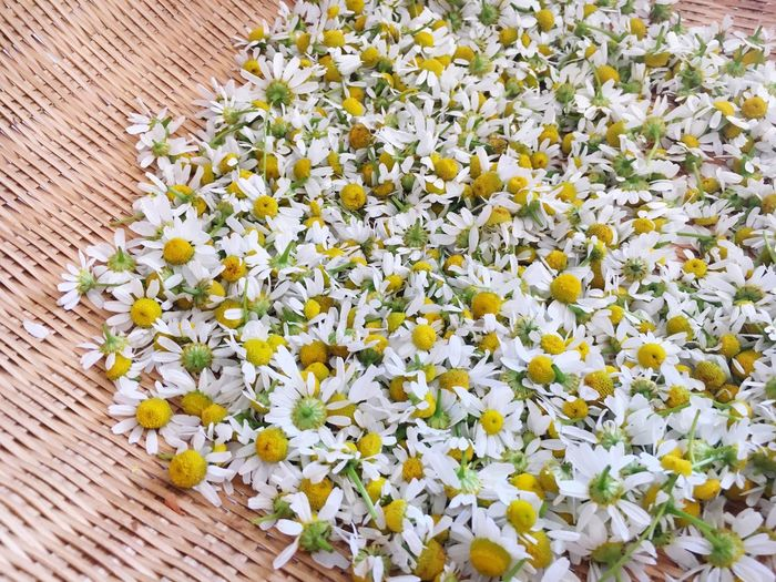 High angle view of chamomile flowers in wicker container