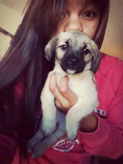 Puppy Cute Want!