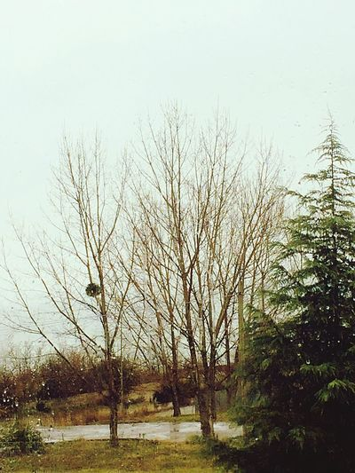 🍂 Tree Plant