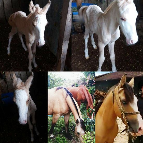 Babyhorse Fhaterandmother Mybaby Horse Domestic Animals Animal Themes Verybeautiful 😍😍😍😍❤️❤️❤️❤️❤️Now you need a name 😍😒😞 BlueEyes Beauriful Babyboy
