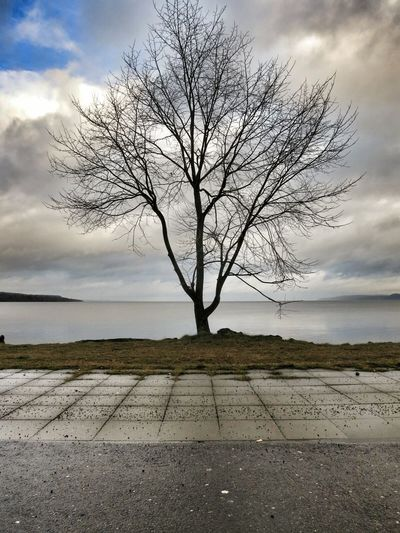 My Tree at the Boardwalk; amazing Low Angle Landscape by the lake ?