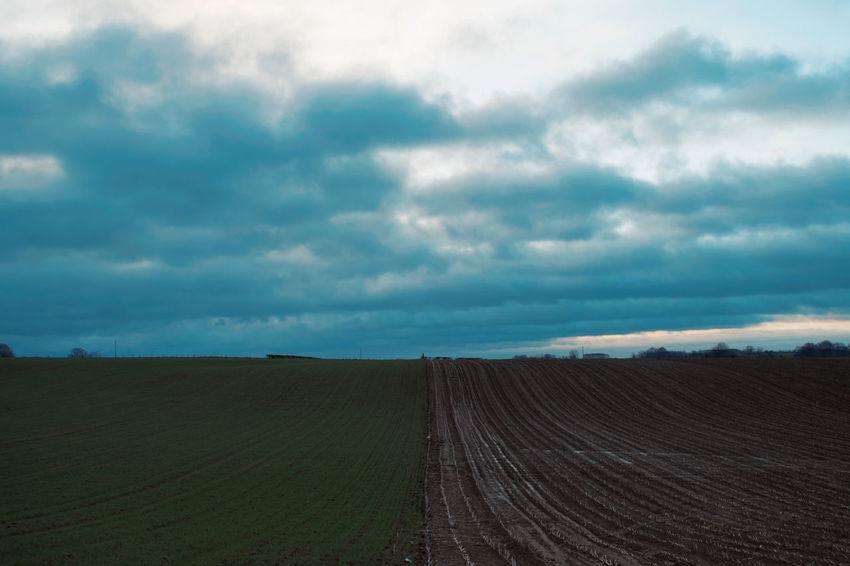 Agriculture Beauty In Nature Cloud - Sky Day Growth Landscape Nature No People Outdoors Rural Scene Scenics Sky Tranquility