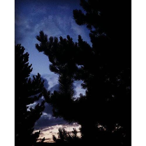Evening Sky Trees Sunset color blue beautiful dark instagood