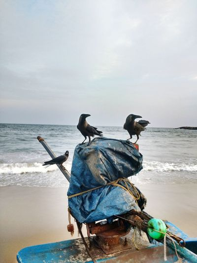 Crows perching on boat at beach against sky