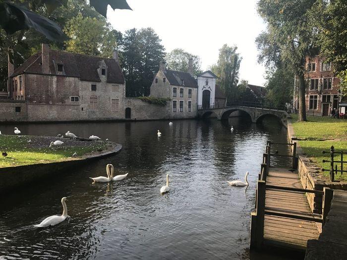 Swan swimming in river against sky
