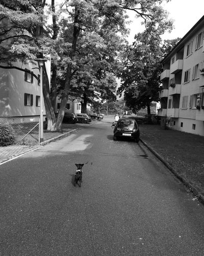 Check This Out Hello World That's Me Taking Photos Hanging Out Streetphoto_color Enjoying Life Streetphotography Natureza 🐦🌳 Nature_collection Morning Photography Dog Love Chihuahualovers Chihuahua Puppy Chihuahuaoftheday Maenatureza Passeio Amigavél