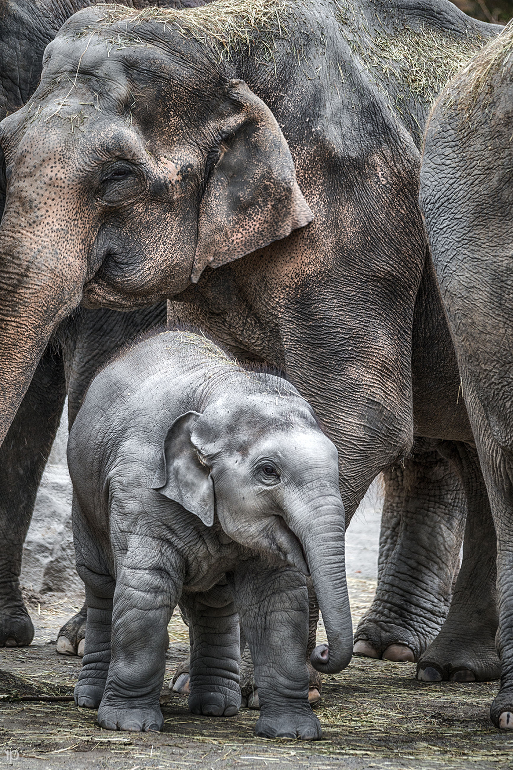 animal themes, mammal, one animal, domestic animals, wildlife, animals in the wild, two animals, no people, close-up, animal head, outdoors, day, togetherness, relaxation, nature, animal family, zoo, safari animals, zoology, elephant