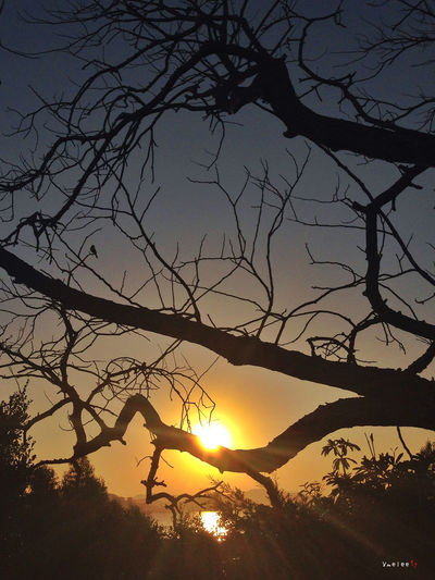 Taking Photos IPhone IPhoneography Iphonephotography Sunset Silhouette Sunset Silhouettes Trees Hugging A Tree Xiamen