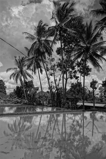 Palm trees by swimming pool against sky