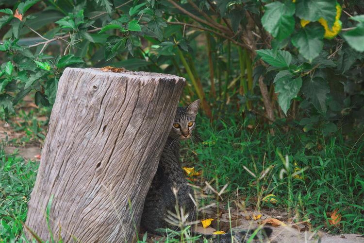 Animal Animal Head  Animal Wildlife Focus On Foreground Land Leaf Mammal Nature One Animal Plant Tree Vertebrate Wood - Material