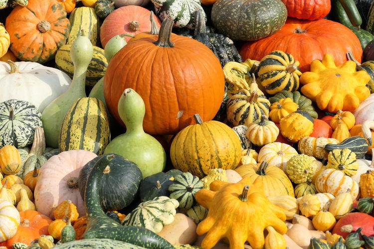 Pumpkins in market during autumn